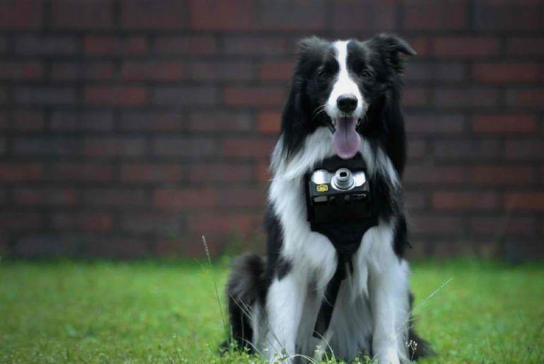 Nikon lança câmera para cachorros