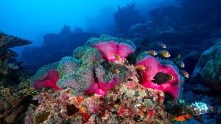 Fotógrafo registra as estranhas criaturas do fundo do mar